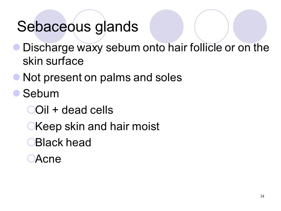 Discharge waxy sebum onto hair follicle or on the skin surface Not present on palms and soles Sebum  Oil + dead cells  Keep skin and hair moist  Black head  Acne Sebaceous glands 34