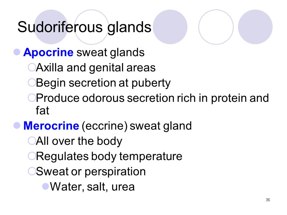 Apocrine sweat glands  Axilla and genital areas  Begin secretion at puberty  Produce odorous secretion rich in protein and fat Merocrine (eccrine) sweat gland  All over the body  Regulates body temperature  Sweat or perspiration Water, salt, urea Sudoriferous glands 36