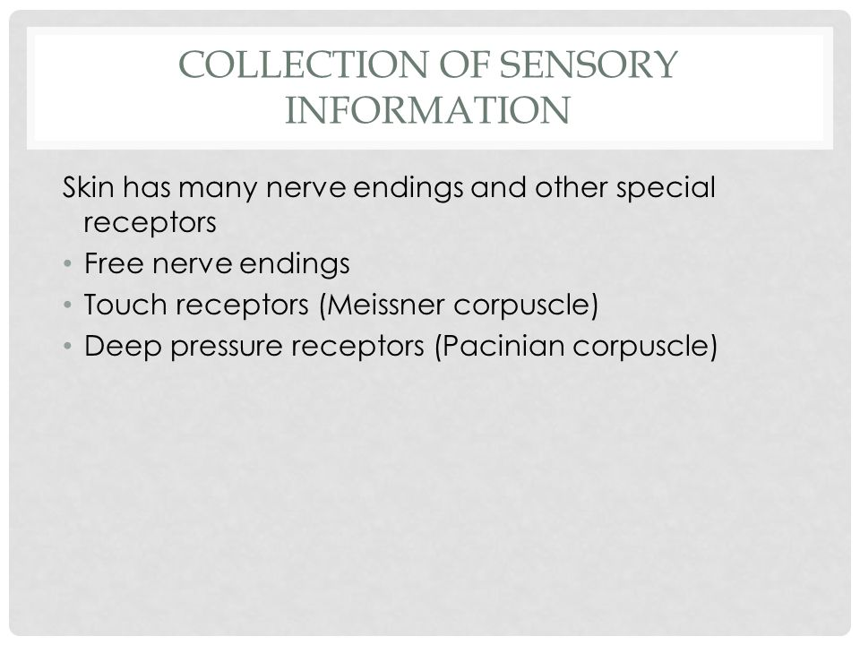 COLLECTION OF SENSORY INFORMATION Skin has many nerve endings and other special receptors Free nerve endings Touch receptors (Meissner corpuscle) Deep pressure receptors (Pacinian corpuscle)