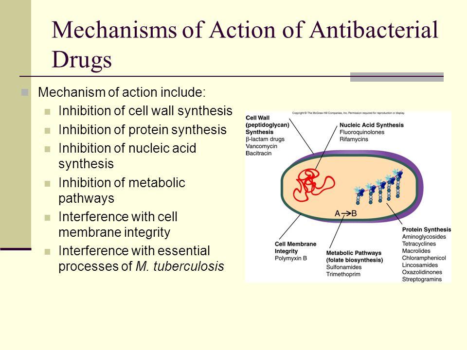 Ciprofloxacin inhibits nucleic acid synthesis inhibitors
