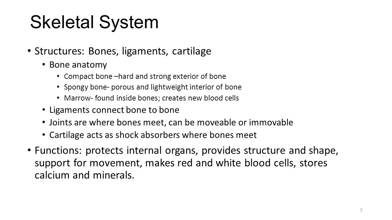 Skeletal System Structures: Bones, ligaments, cartilage Bone anatomy Compact bone –hard and strong exterior of bone Spongy bone- porous and lightweight interior of bone Marrow- found inside bones; creates new blood cells Ligaments connect bone to bone Joints are where bones meet, can be moveable or immovable Cartilage acts as shock absorbers where bones meet Functions: protects internal organs, provides structure and shape, support for movement, makes red and white blood cells, stores calcium and minerals.