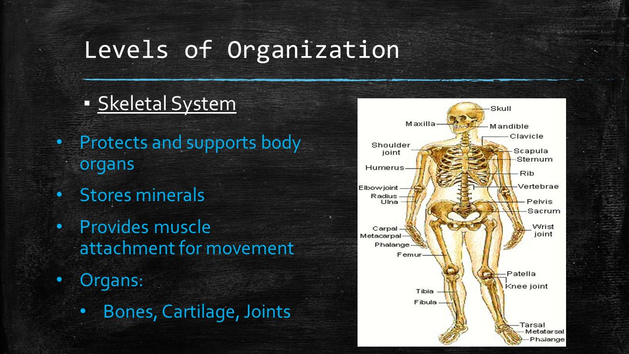 an overview of the systems of the human body