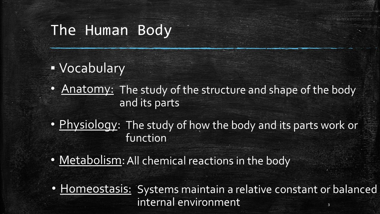 anatomy physiology vocabulary Flashcard practice questions on organ systems, types of tissue, mitosis and miesos, organ systems and more.
