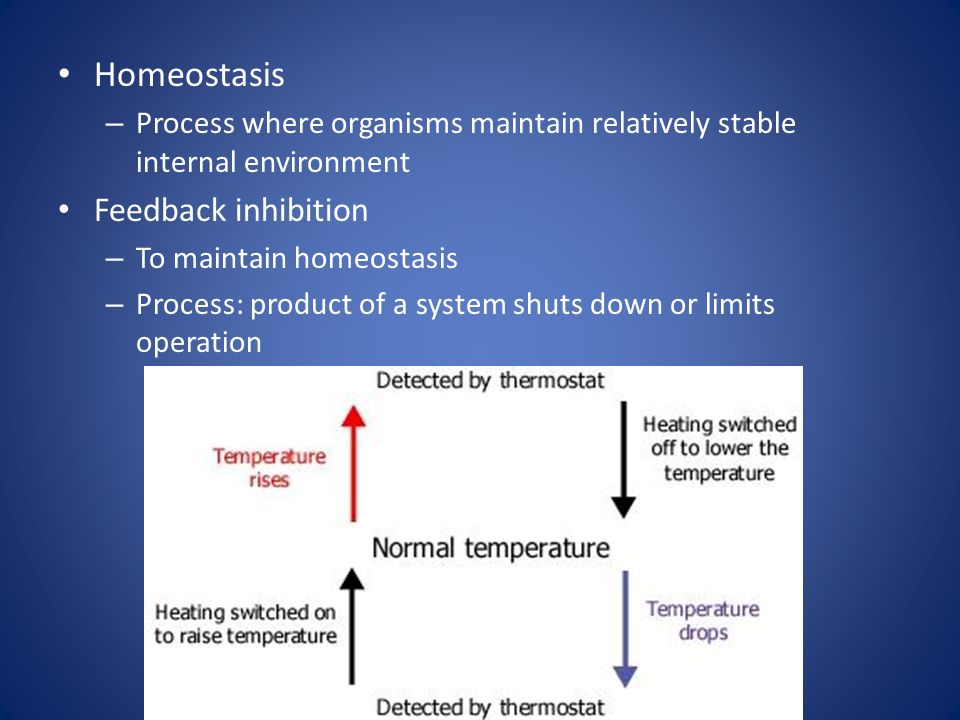 Homeostasis – Process where organisms maintain relatively stable internal environment Feedback inhibition – To maintain homeostasis – Process: product of a system shuts down or limits operation