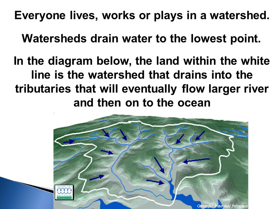 Everyone lives, works or plays in a watershed. Watersheds drain water to the lowest point.