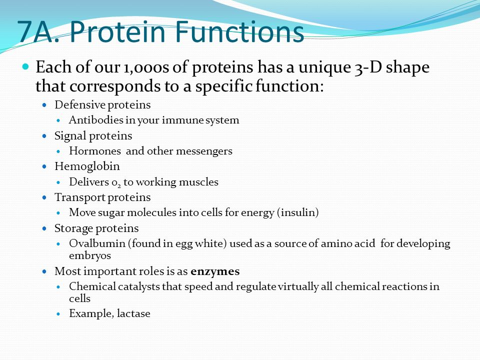 7. Proteins Protein- Polymer constructed from amino acid monomers.