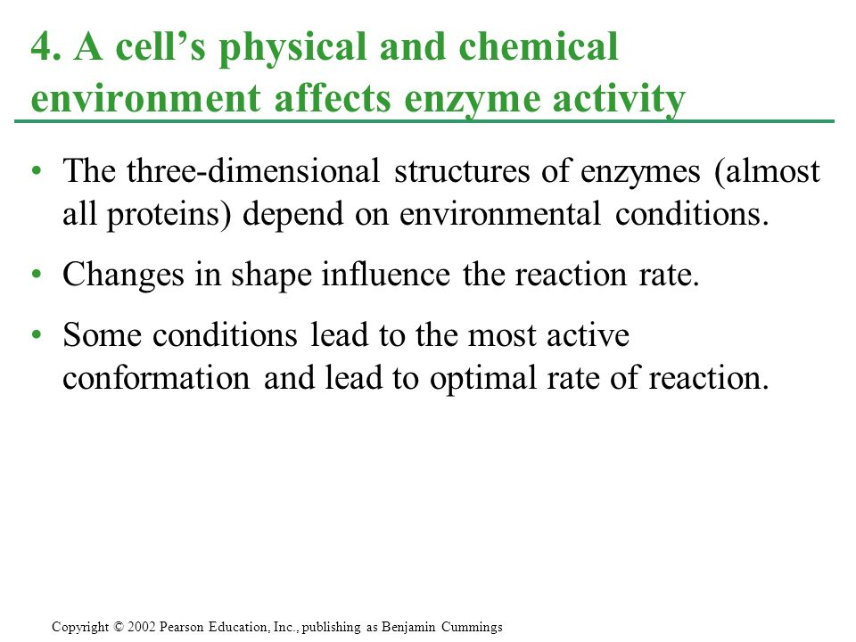 The three-dimensional structures of enzymes (almost all proteins) depend on environmental conditions.