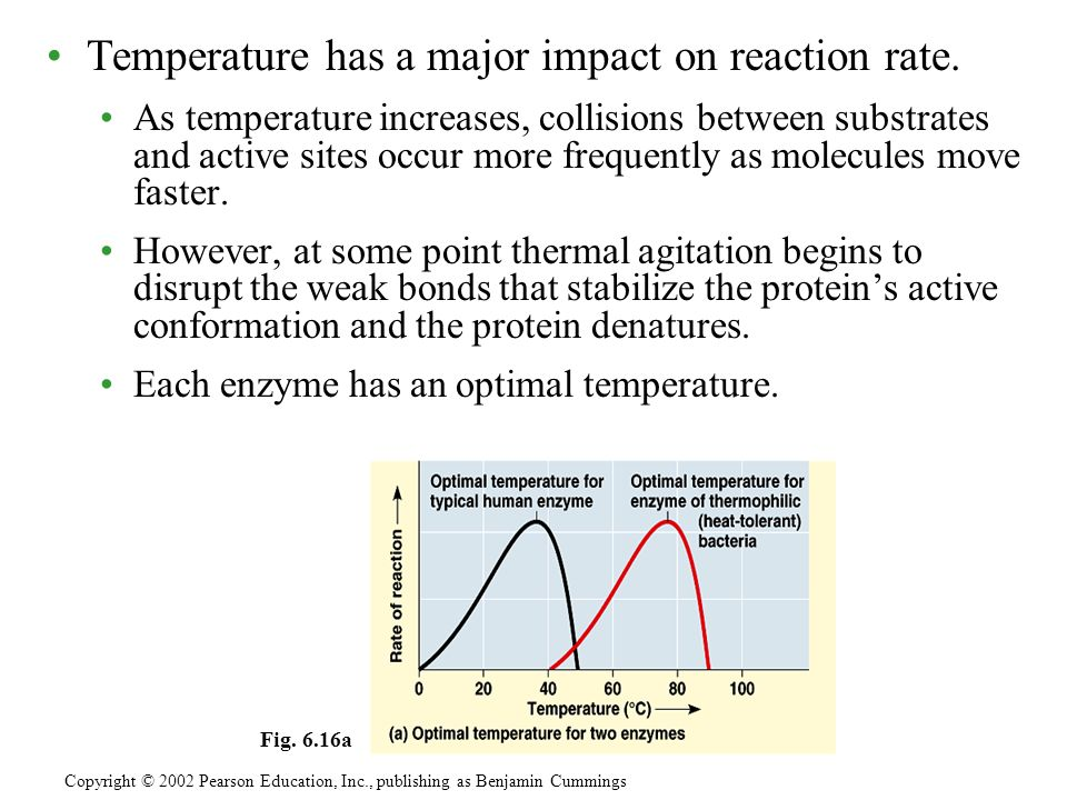 Temperature has a major impact on reaction rate.