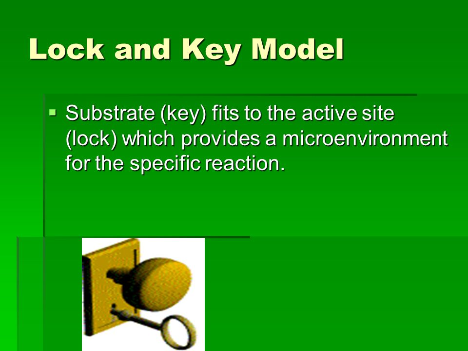 Lock and Key Model  Substrate (key) fits to the active site (lock) which provides a microenvironment for the specific reaction.