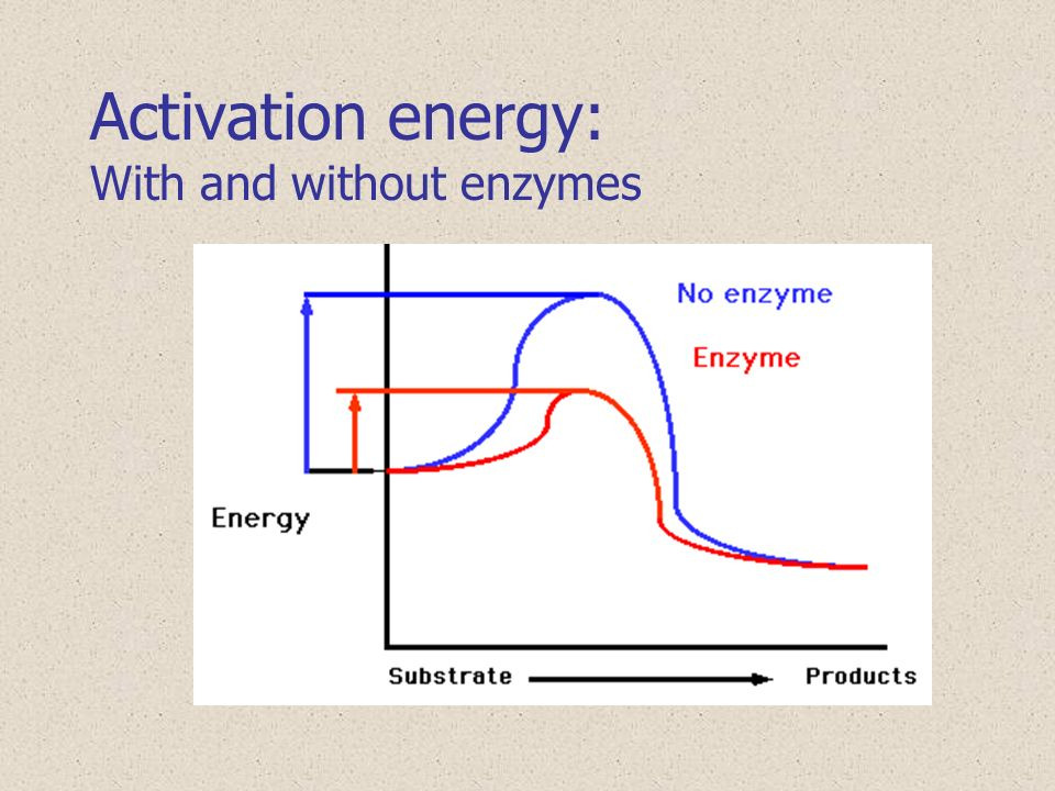 Activation energy change