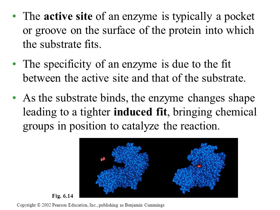 The active site of an enzyme is typically a pocket or groove on the surface of the protein into which the substrate fits.