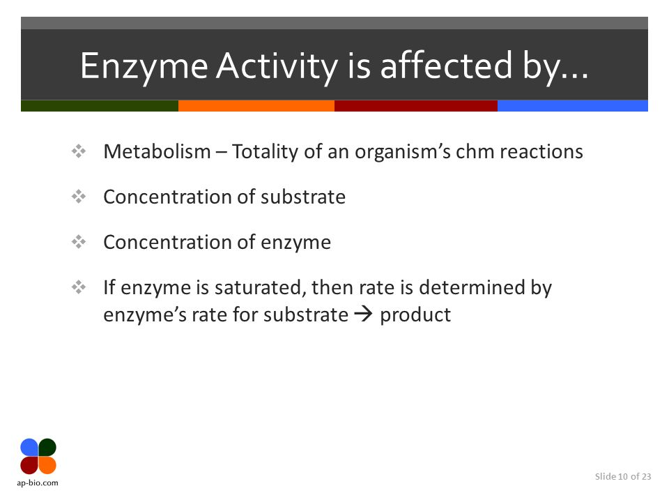 Slide 10 of 23 Enzyme Activity is affected by…  Metabolism – Totality of an organism's chm reactions  Concentration of substrate  Concentration of enzyme  If enzyme is saturated, then rate is determined by enzyme's rate for substrate  product