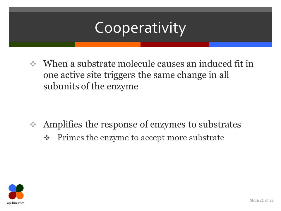Slide 21 of 23 Cooperativity  When a substrate molecule causes an induced fit in one active site triggers the same change in all subunits of the enzyme  Amplifies the response of enzymes to substrates  Primes the enzyme to accept more substrate