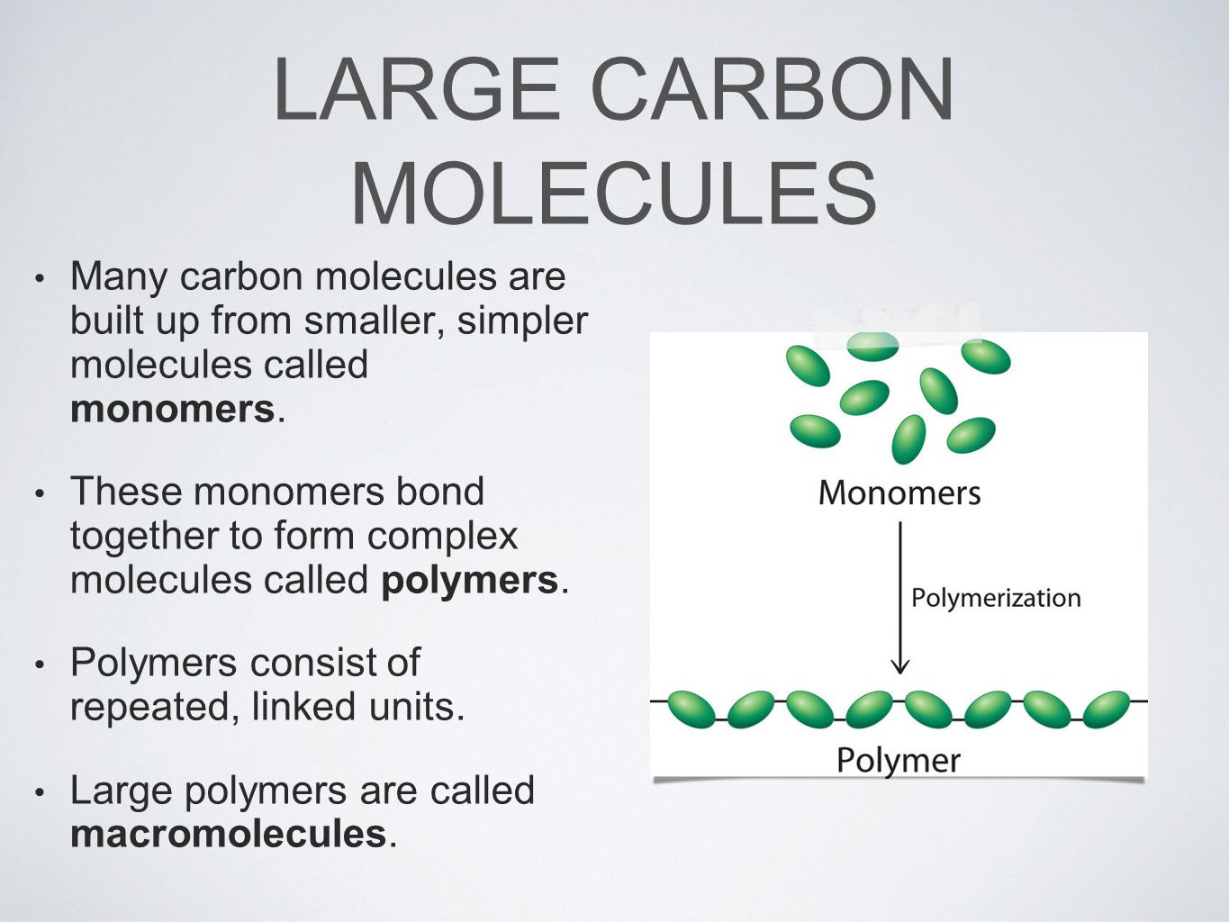 LARGE CARBON MOLECULES Many carbon molecules are built up from smaller, simpler molecules called monomers.