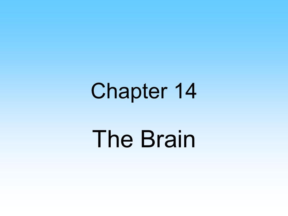 Chapter 14 The Brain
