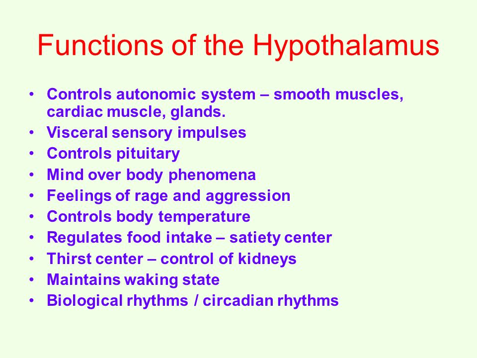 Functions of the Hypothalamus Controls autonomic system – smooth muscles, cardiac muscle, glands.