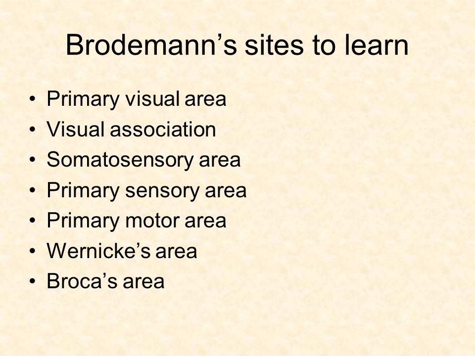 Brodemann's sites to learn Primary visual area Visual association Somatosensory area Primary sensory area Primary motor area Wernicke's area Broca's area