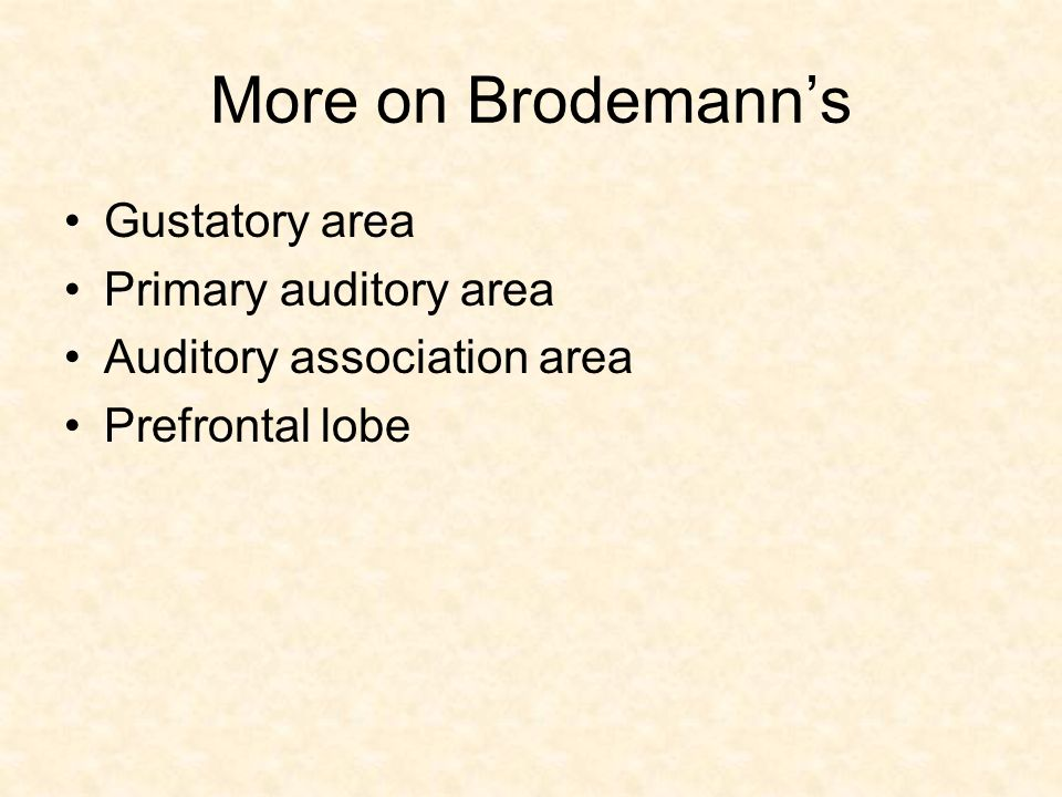 More on Brodemann's Gustatory area Primary auditory area Auditory association area Prefrontal lobe