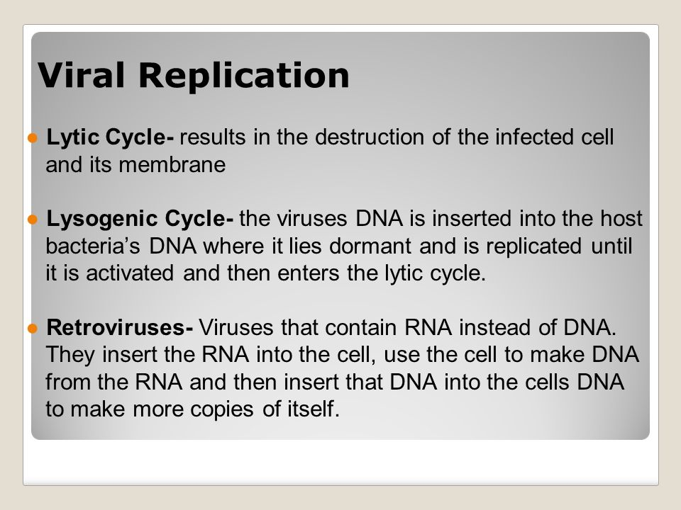 ●Lytic Cycle- results in the destruction of the infected cell and its membrane ●Lysogenic Cycle- the viruses DNA is inserted into the host bacteria's DNA where it lies dormant and is replicated until it is activated and then enters the lytic cycle.