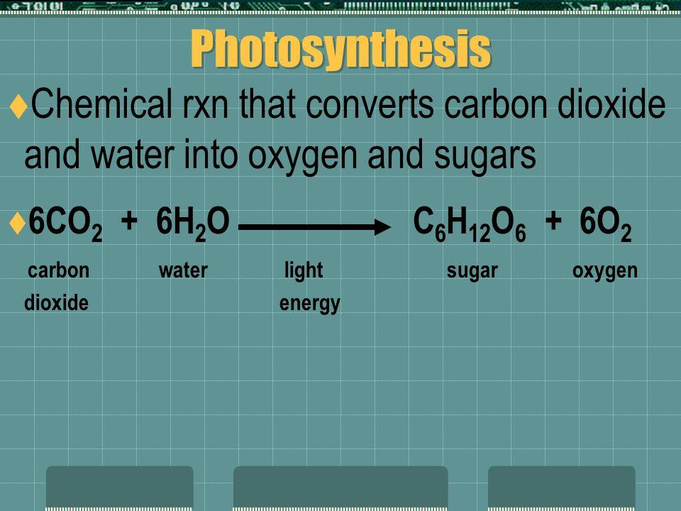Energy Flow  Not all autotrophs use the sun's energy.