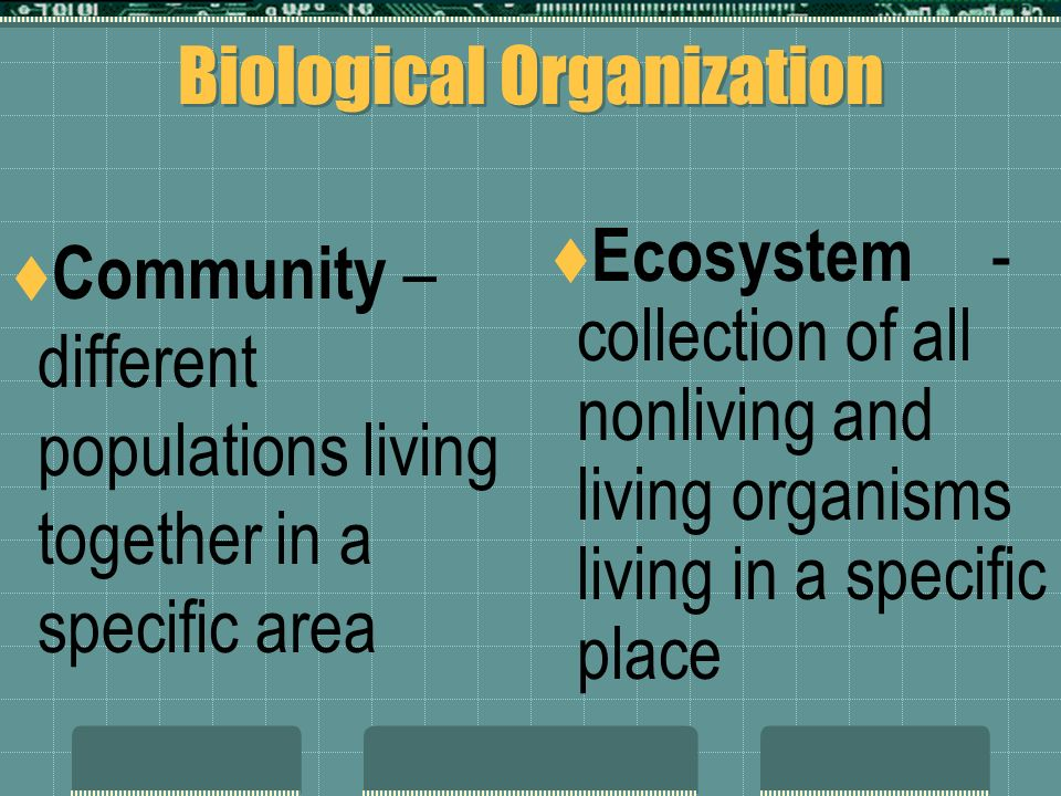 Biological Organization  Individual – a single organism of a species  Population – group of individuals of the same species living together in a specific area