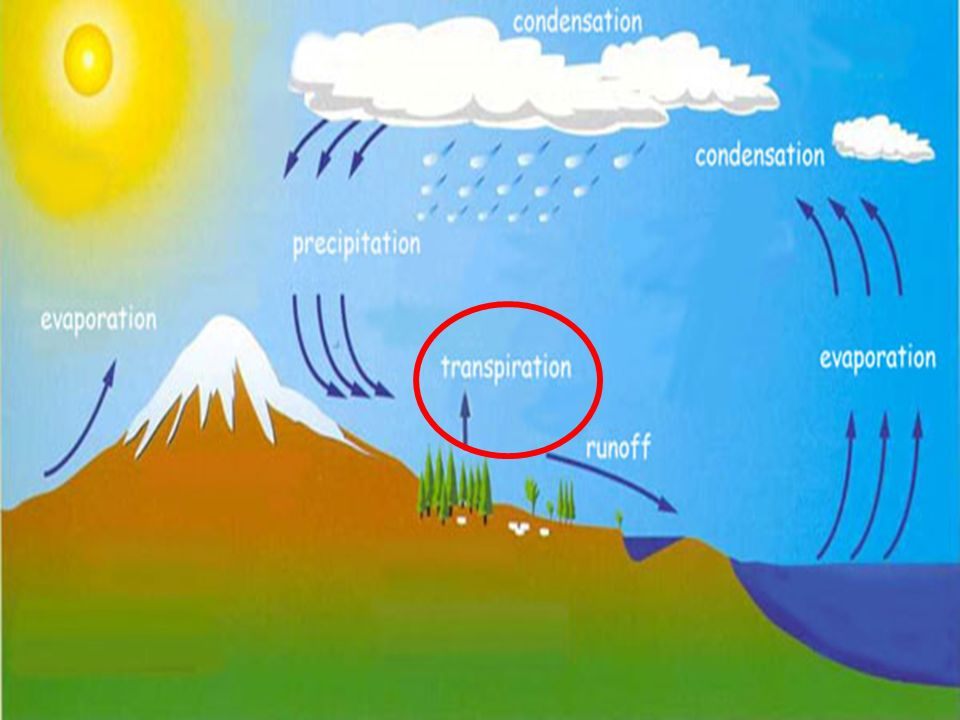 The process of evaporation from plants is called transpiration.