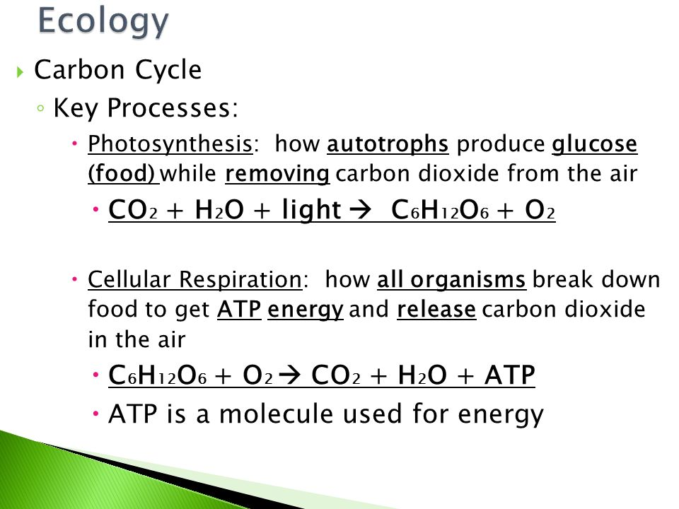  Carbon Cycle ◦ Importance  Used in making living tissues and animal skeletons  Regulates temperature in the atmosphere (carbon dioxide)  Plants  photosynthesis  pass along glucose in food webs