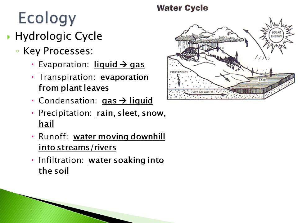  Hydrologic Cycle ◦ Importance  Every living thing requires WATER