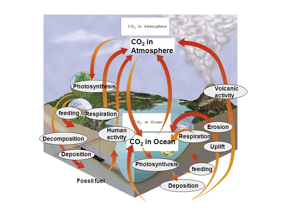 CO 2 in Atmosphere Photosynthesis feeding Respiration Deposition Carbonate Rocks Deposition Decomposition Fossil fuel Volcanic activity Uplift Erosion Respiration Human activity CO 2 in Ocean Photosynthesis