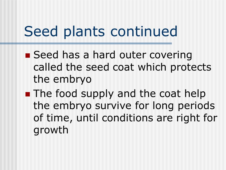 Seed plants continued Seed has a hard outer covering called the seed coat which protects the embryo The food supply and the coat help the embryo survive for long periods of time, until conditions are right for growth