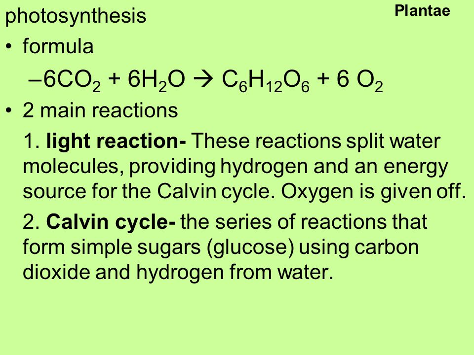Plantae photosynthesis formula –6CO 2 + 6H 2 O  C 6 H 12 O O 2 2 main reactions 1.