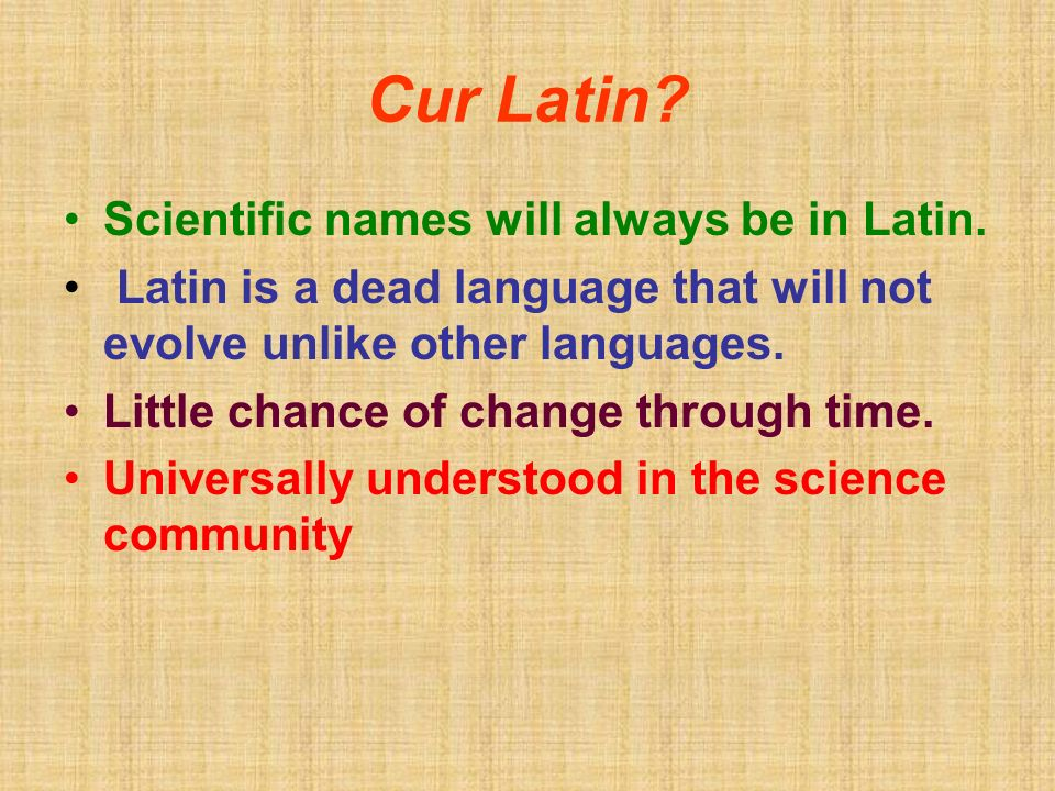 Cur Latin. Scientific names will always be in Latin.