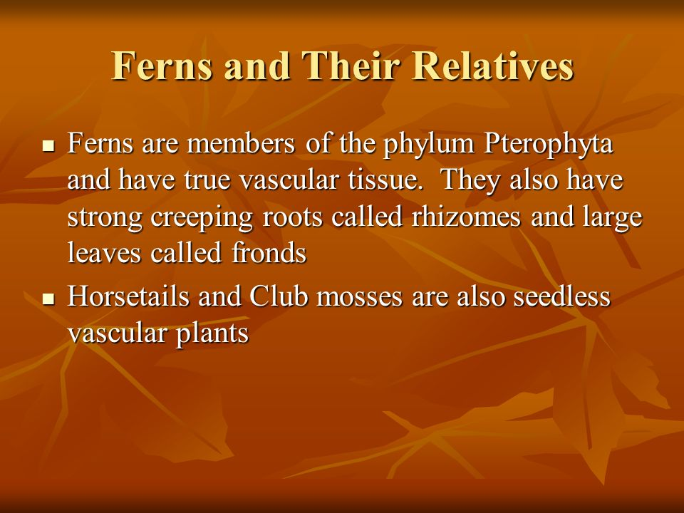 Ferns and Their Relatives Ferns are members of the phylum Pterophyta and have true vascular tissue.