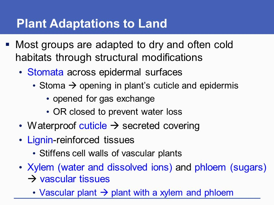 How Bryophytes are adapted to live on land?