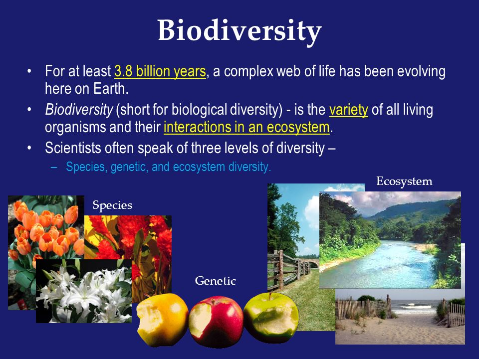 Biodiversity For at least 3.8 billion years, a complex web of life has been evolving here on Earth.