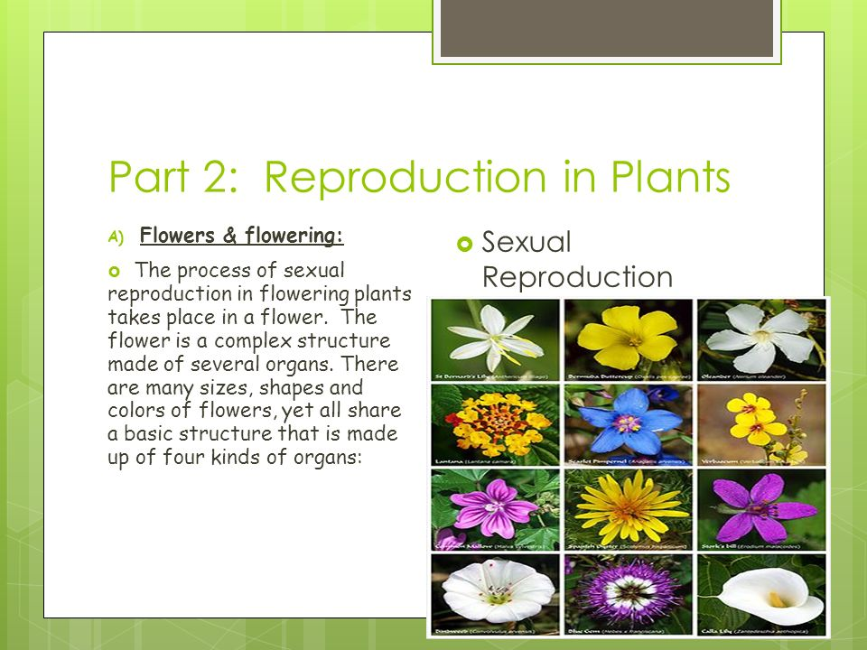 Part 2: Reproduction in Plants A) Flowers & flowering:  The process of sexual reproduction in flowering plants takes place in a flower.
