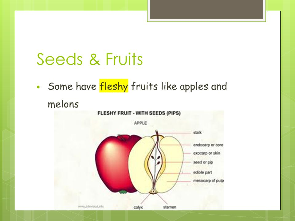 Seeds & Fruits  Some have fleshy fruits like apples and melons
