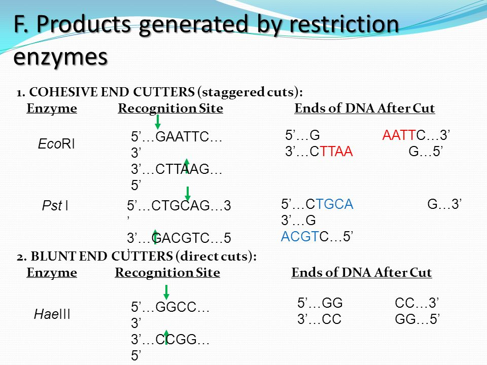 F. Products generated by restriction enzymes 1.