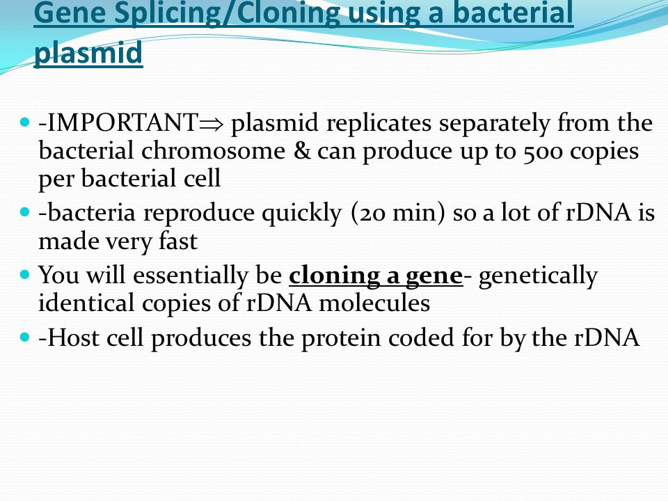 Gene Splicing/Cloning using a bacterial plasmid -IMPORTANT  plasmid replicates separately from the bacterial chromosome & can produce up to 500 copies per bacterial cell -bacteria reproduce quickly (20 min) so a lot of rDNA is made very fast You will essentially be cloning a gene- genetically identical copies of rDNA molecules -Host cell produces the protein coded for by the rDNA