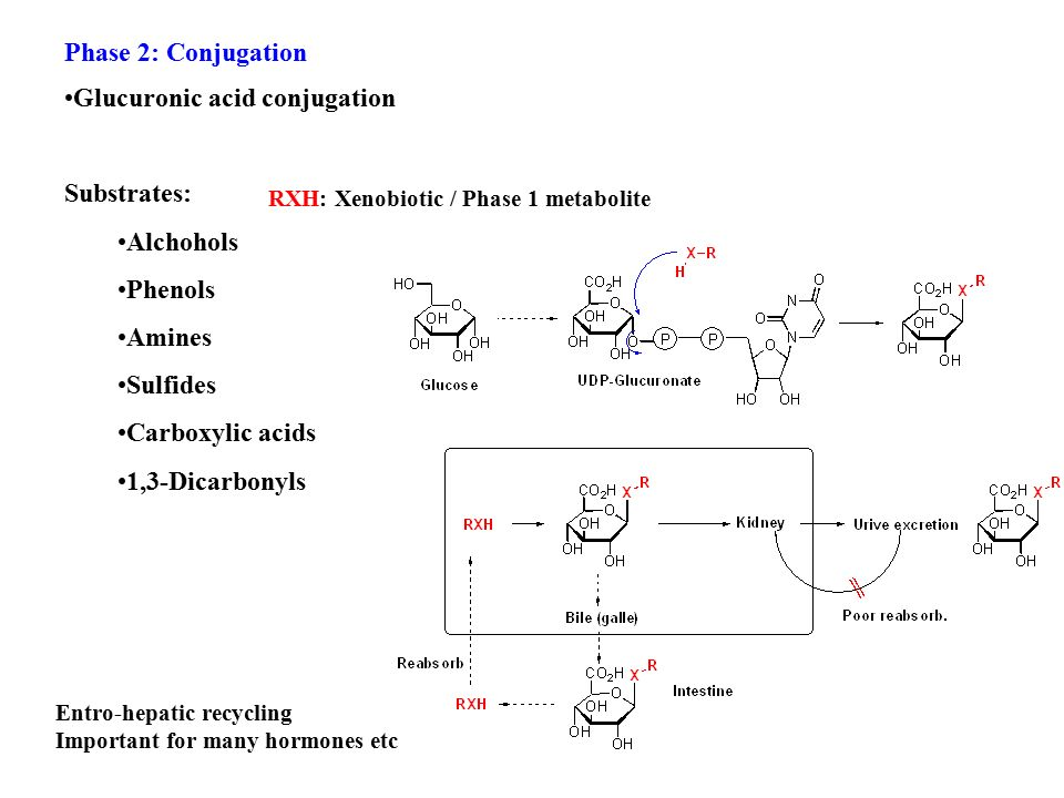 Phase 2: Conjugation Glucuronic acid conjugation Substrates: Alchohols Phenols Amines Sulfides Carboxylic acids 1,3-Dicarbonyls RXH: Xenobiotic / Phase 1 metabolite Entro-hepatic recycling Important for many hormones etc