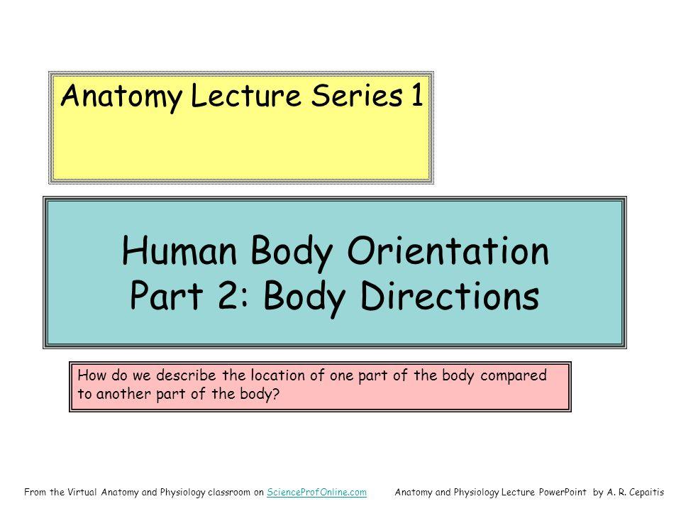 Berühmt Anatomy And Physiology 1 Online Fotos - Menschliche Anatomie ...