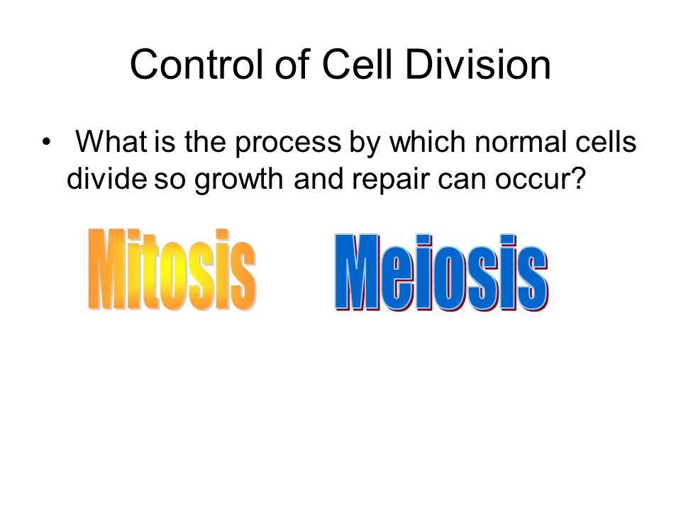 Control of Cell Division What is the process by which normal cells divide so growth and repair can occur