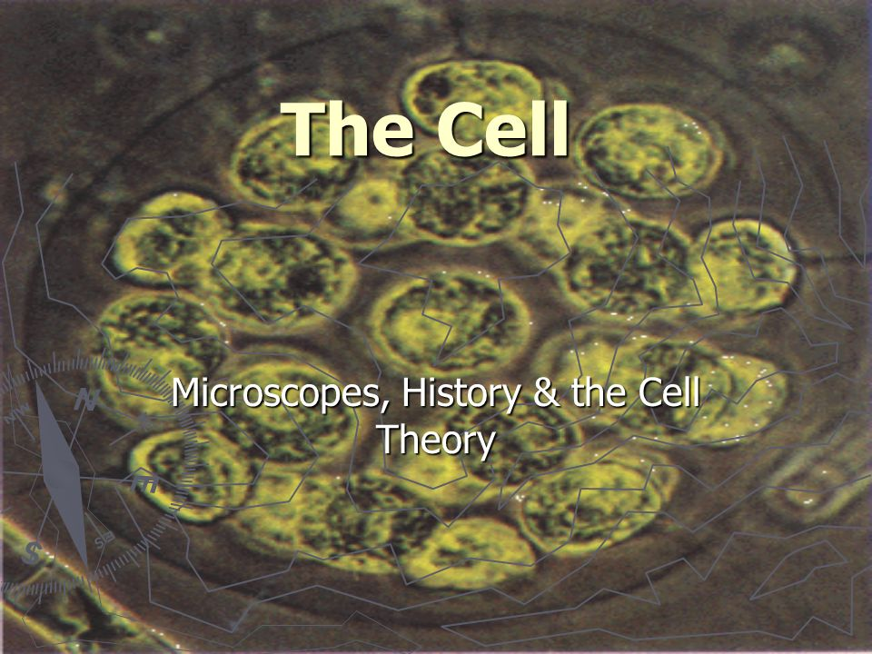 The Cell Microscopes, History & the Cell Theory