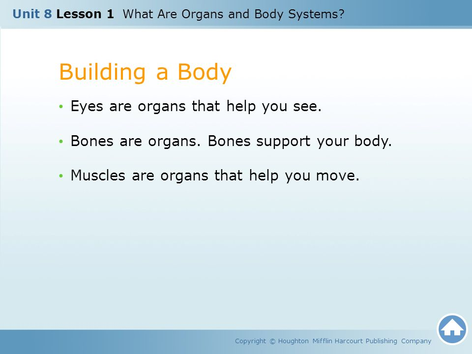 Unit 8 Lesson 1 What Are Organs and Body Systems.