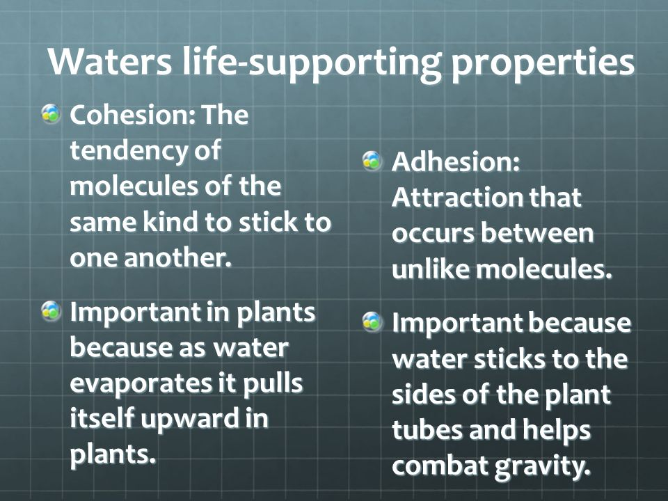 Waters life-supporting properties Cohesion: The tendency of molecules of the same kind to stick to one another.