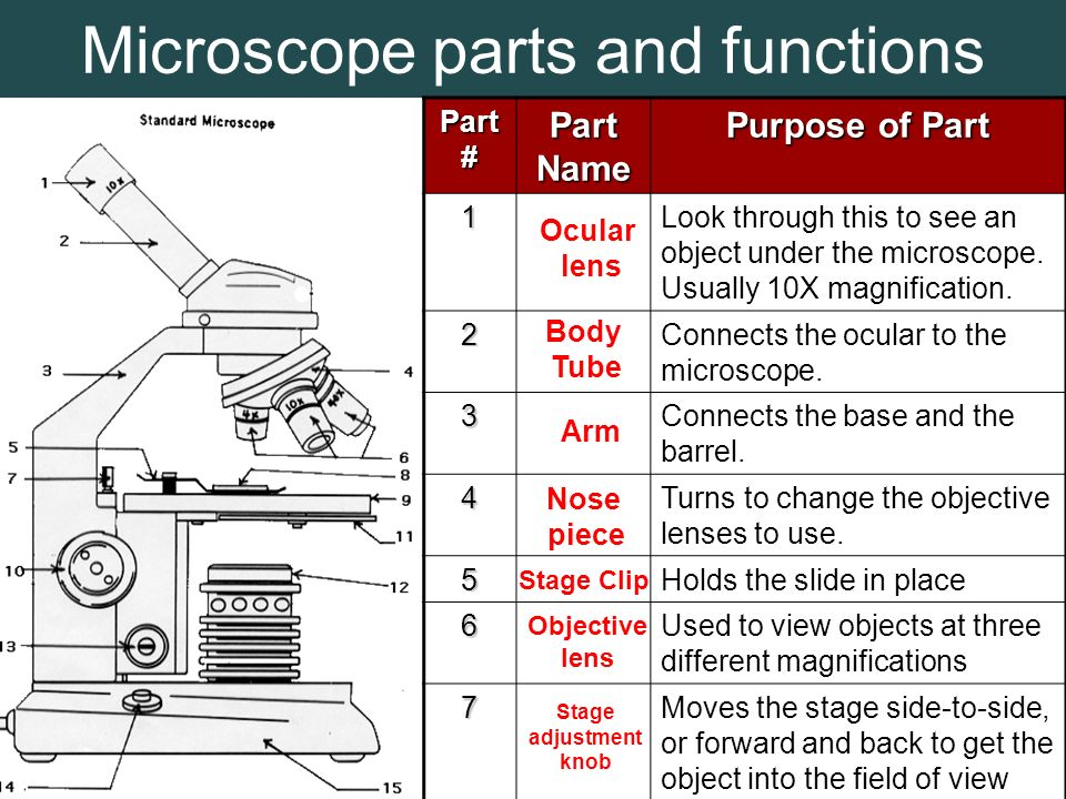 Label A Microscope Nose Images & Pictures - Moyuk