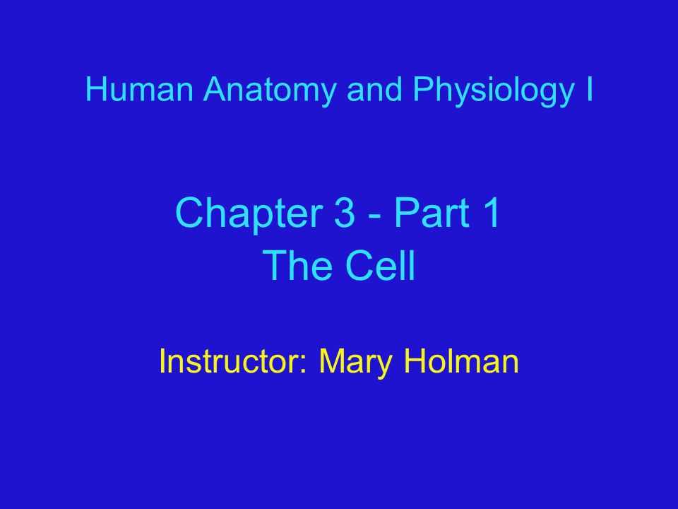 Human Anatomy and Physiology I Chapter 3 - Part 1 The Cell ...