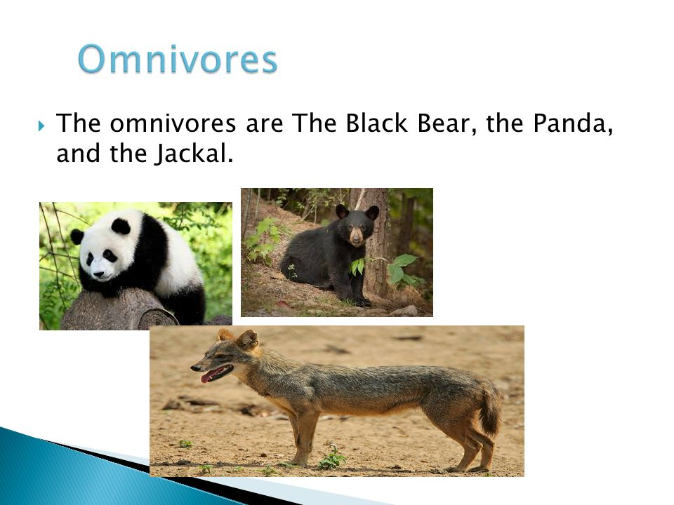  The omnivores are The Black Bear, the Panda, and the Jackal.
