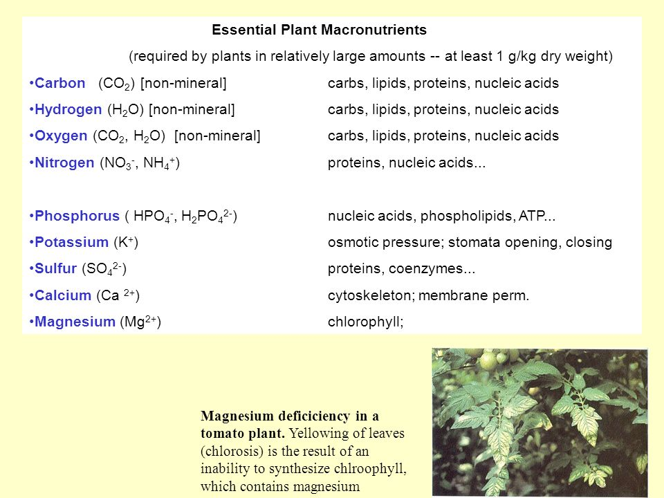 secondary nutrients in plants
