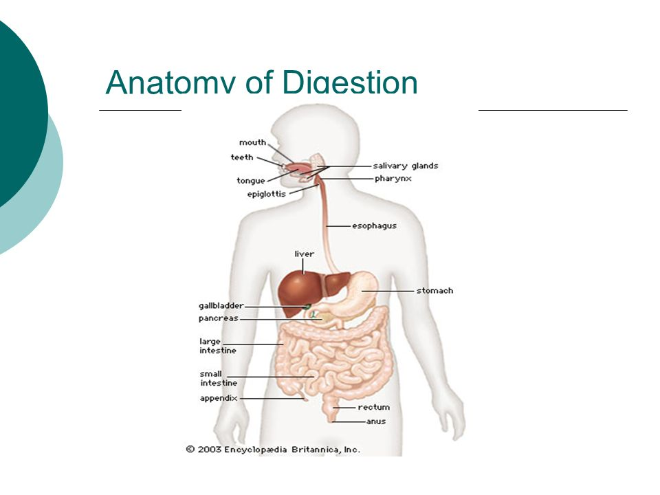 Anatomy of swallowing